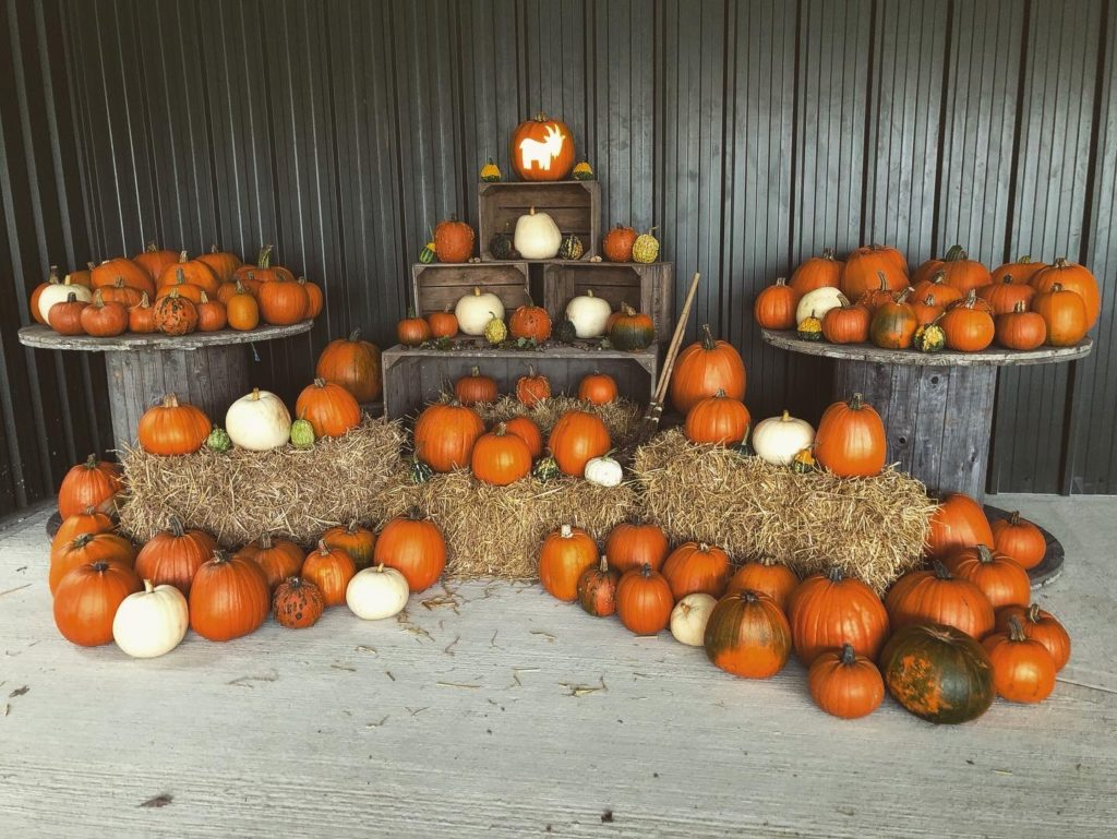 Pumpkin Carving at Fielding Cottage
