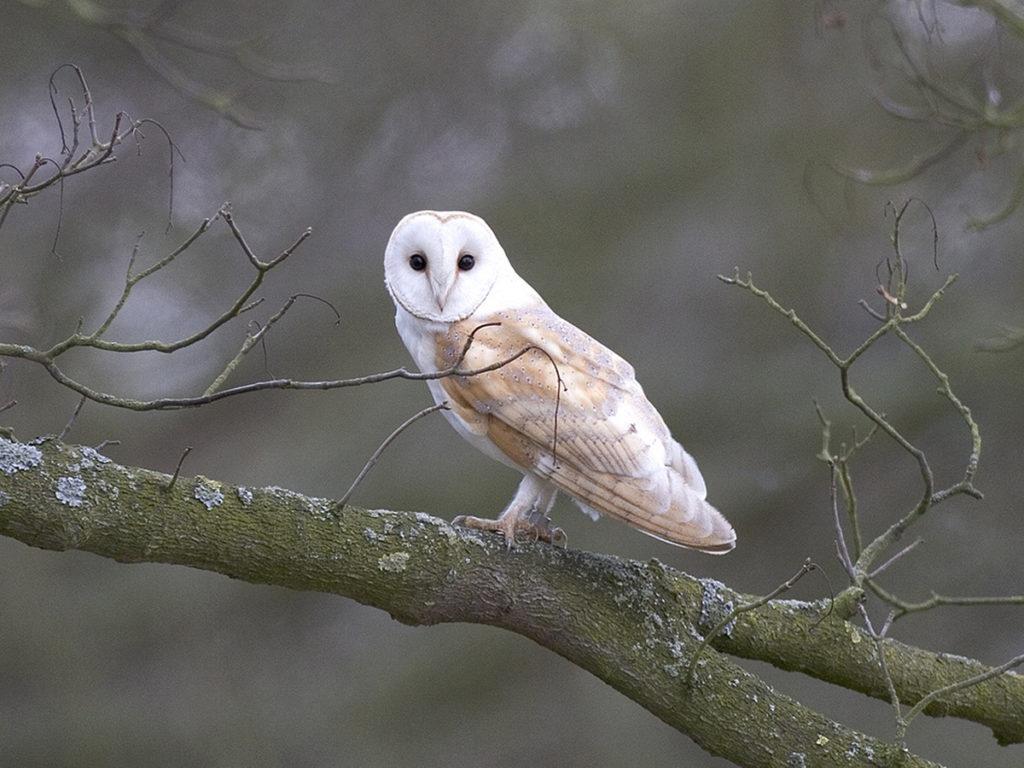 Day becomes night wildlife walk at Holkham